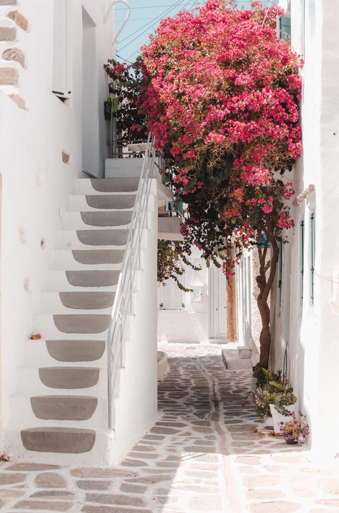 Jolis escaliers et bougainvillier à Parikia, Paros