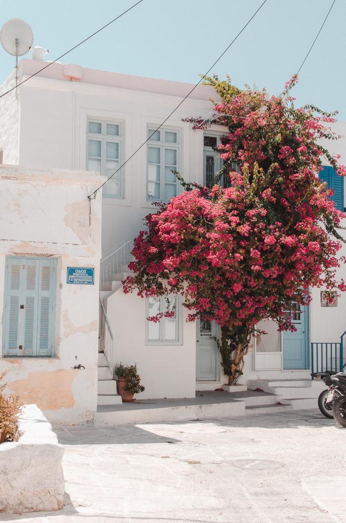 Bougainvillia à Parikia, Paros